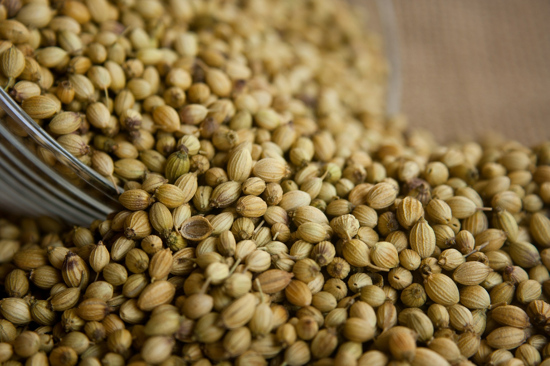 What is a Coriander Seed