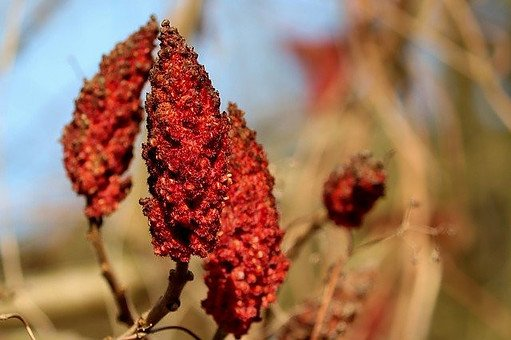 What is Sumac Spice