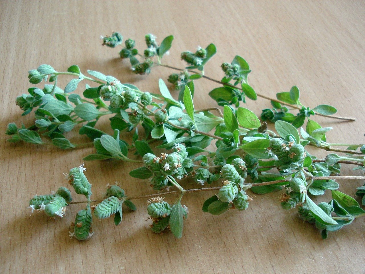 What is Marjoram herb