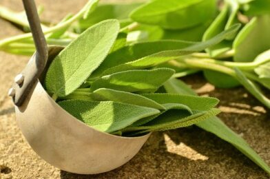 What is Sage Herb